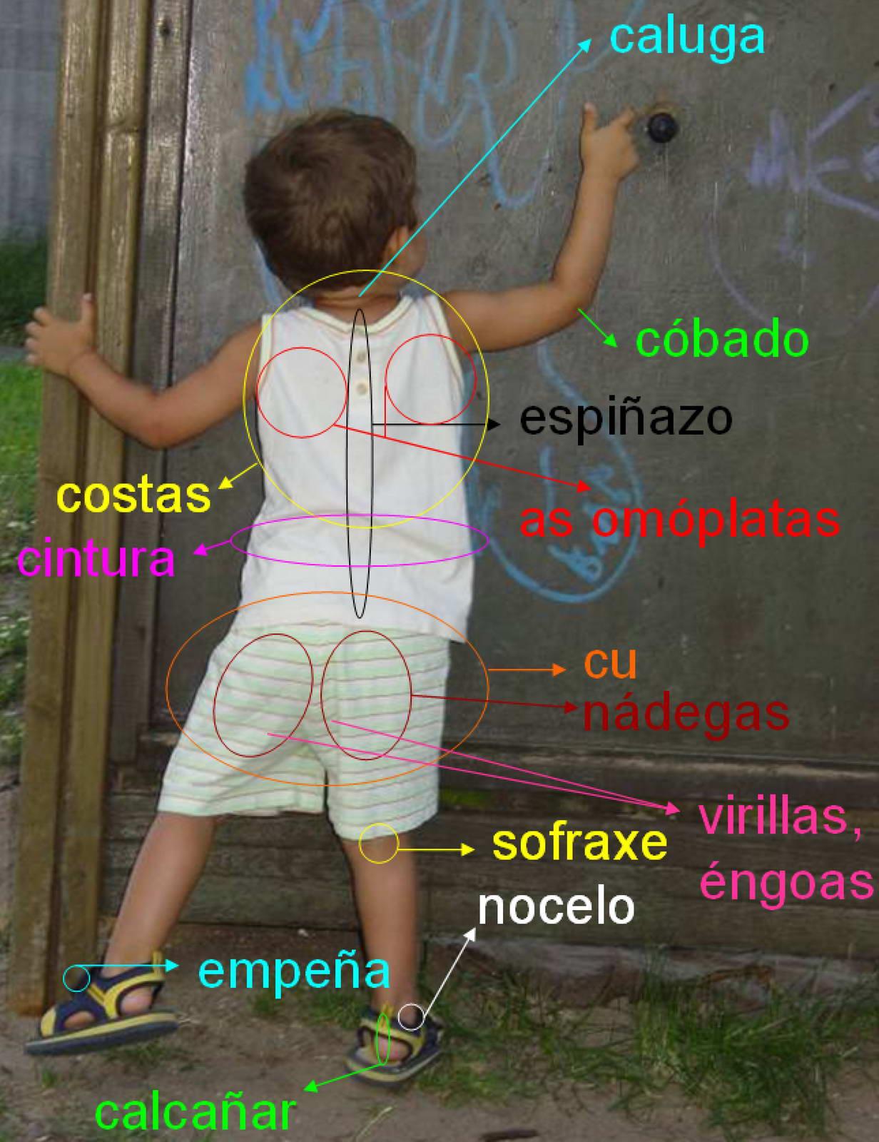 partes_do_corpo_3